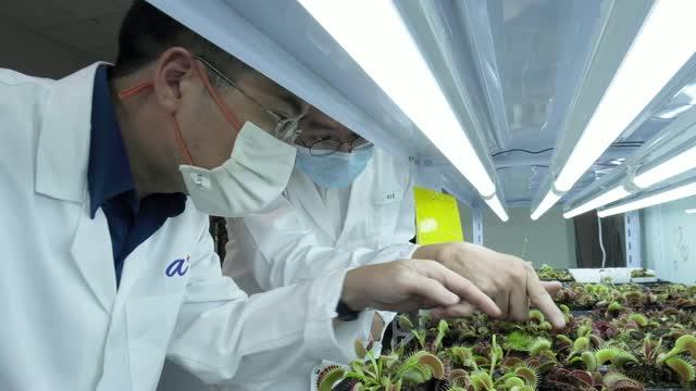 NTU Singapore scientists develop device to 'communicate' with plants
