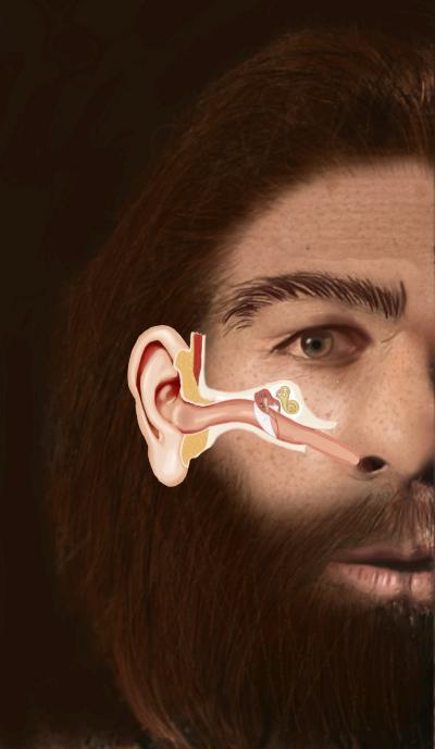 Eustachian Tube in Neanderthal Man