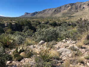 Scrubland of the Chihuahuan Desert