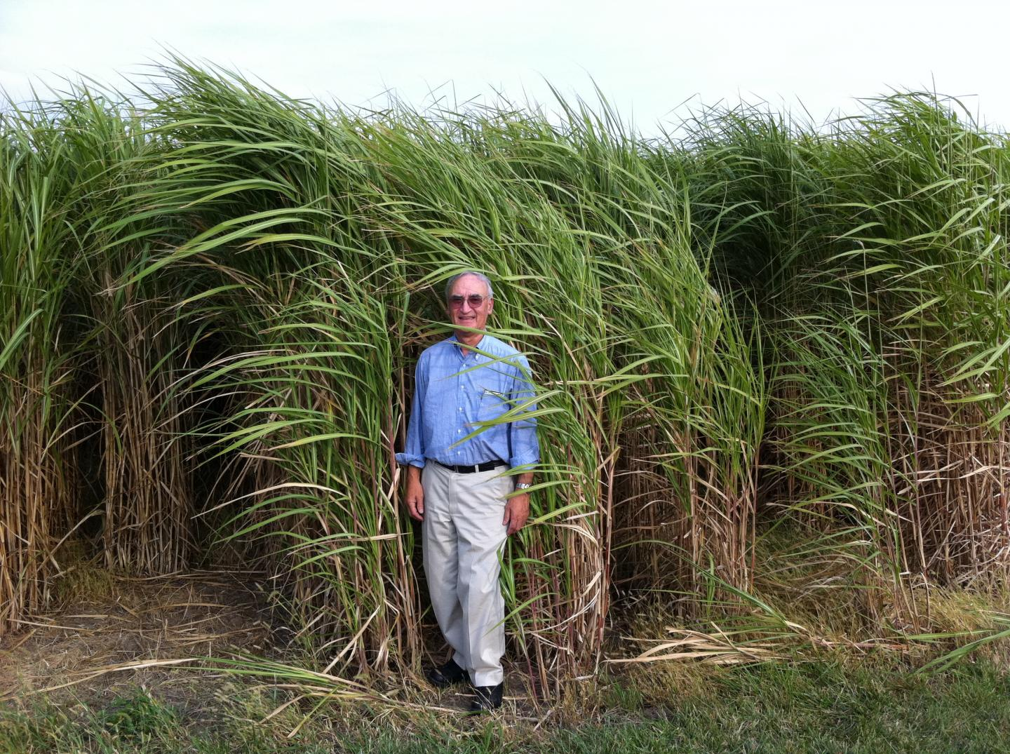 Gerald Fink Standing in a Field of Miscanthus