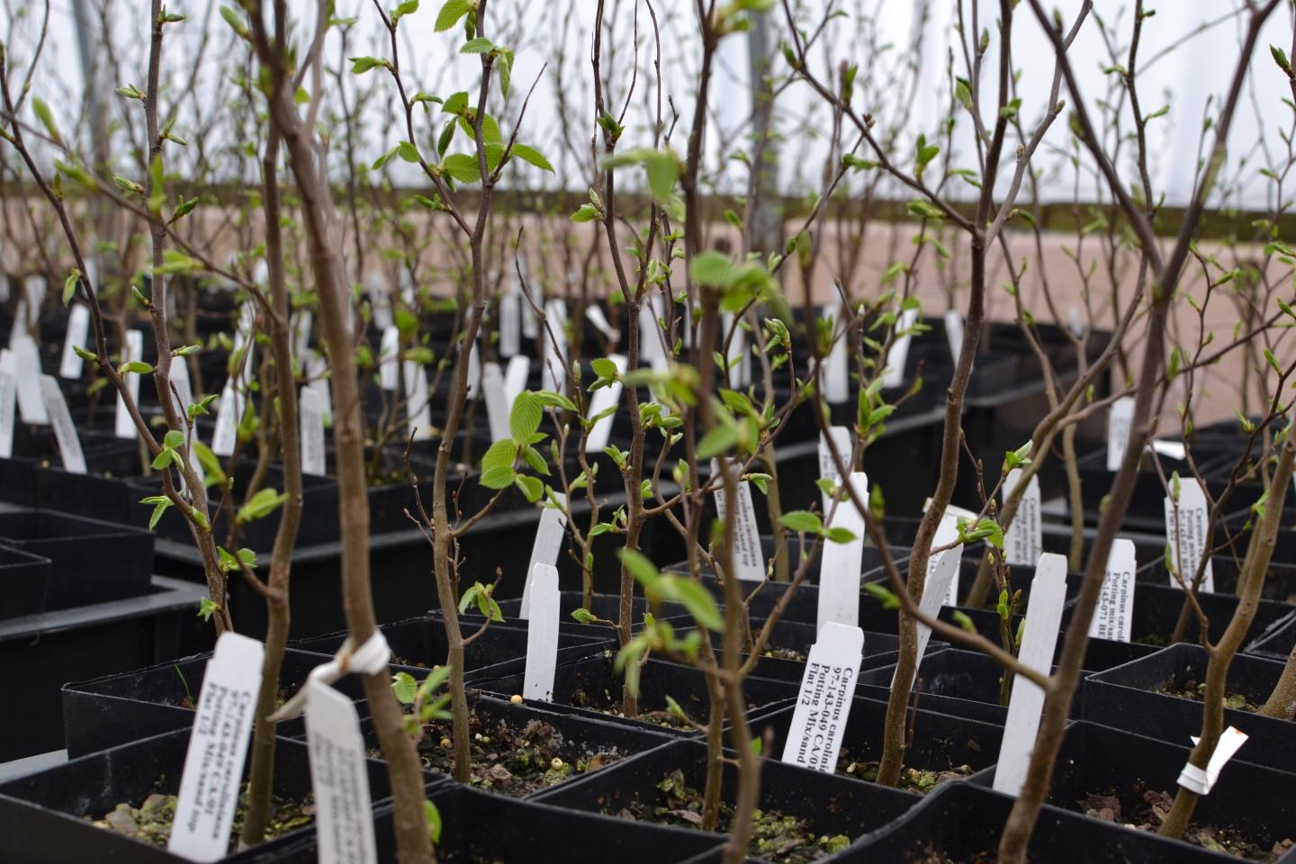 Living Collections and Ex Situ Conservation
