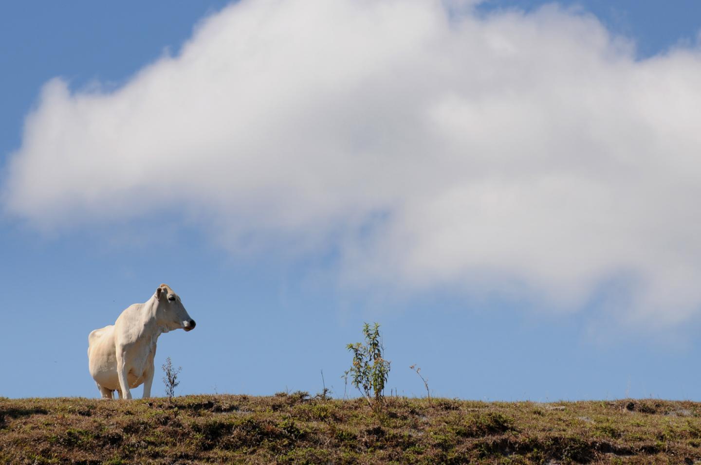 Livestock Colombia