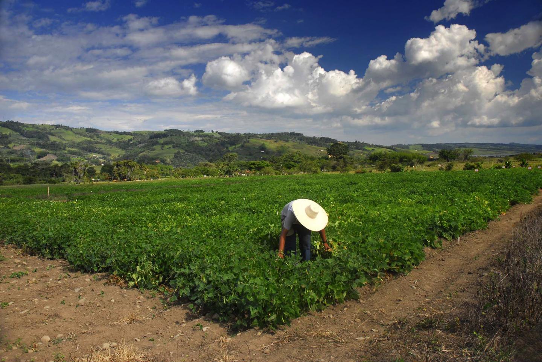 Bean Farm Colombia