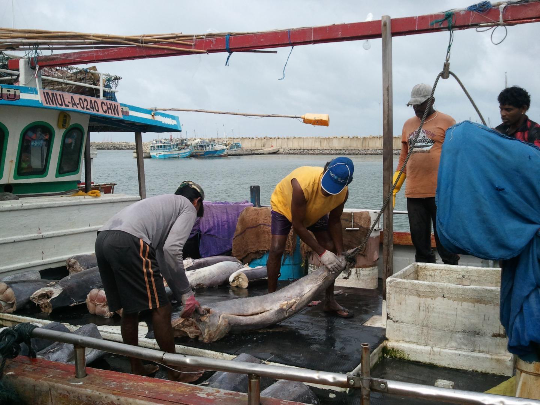 Sri Lanka Fishing