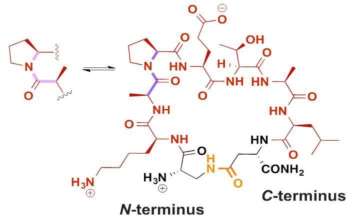 Making a 'Beeline' Past the Blood-Brain Barrier for Drug Delivery
