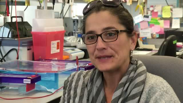 SBP's Dr. Alessandra Sacco on the Dynamics of Muscle Stem Cells