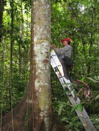 Measuring Amazon Trees