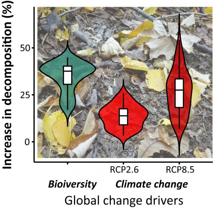 Potential changes in decomposition rates due to global change drivers