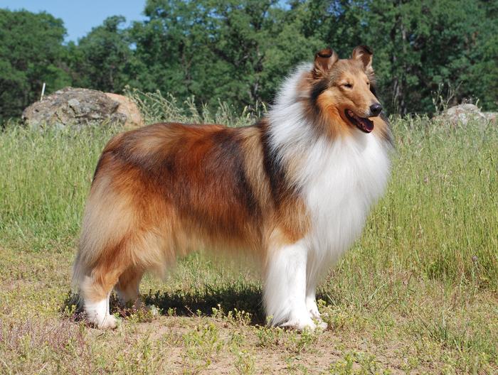 Dog Coat Patterns Have Ancient Origin