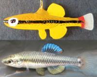 Male Replicas Mimic Live Fish