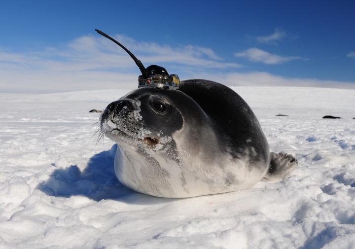 Instrumented Seal