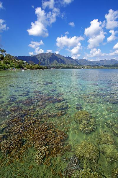 Kaneohe Bay and Coral