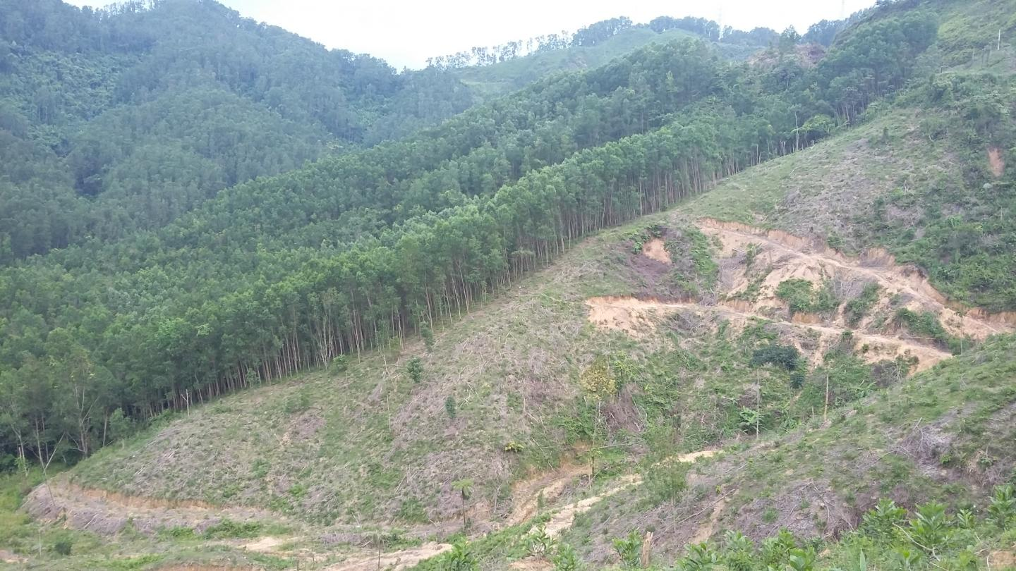 Forests cleared for agriculture on Vietnam mountain