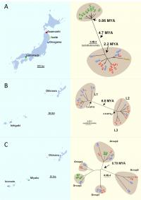 Collection Sites and Evolutionary Tree for Northern Pacific Sea Star, Blue Starfish and Crown-Of-Tho