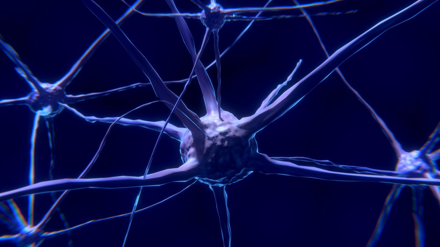 Synchronised or Independent Neurons: This Is How the Brain Encodes Information