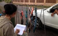 Researchers Conduct a Survey of Fish