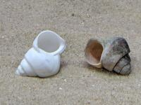 3D Printed Shell with Real Shell