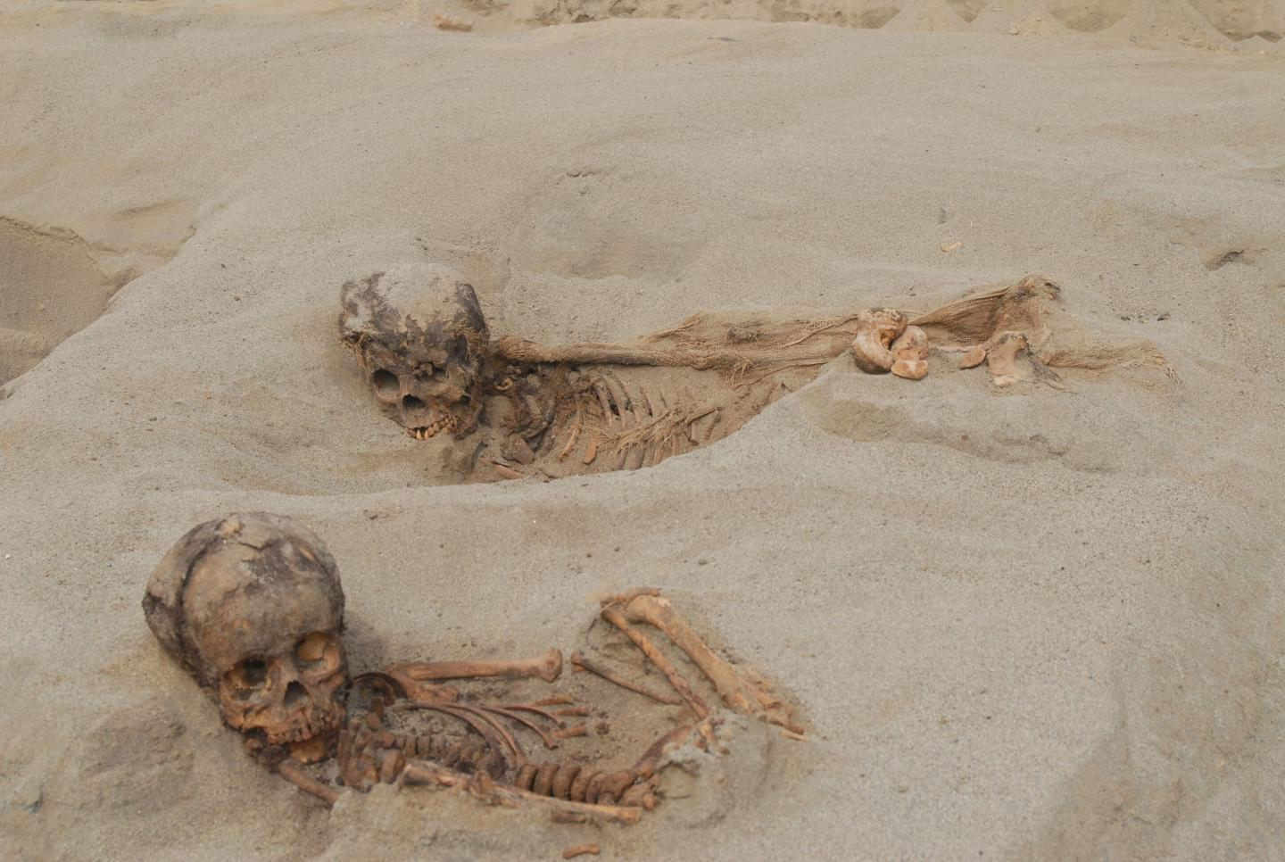 Hundreds of Children and Llamas Sacrificed in a Ritual Event in 15th Century Peru (1 of 2)