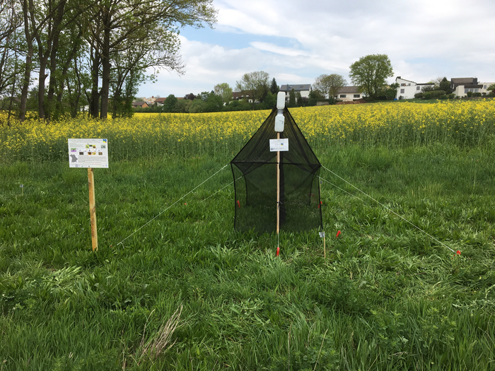 Trap for insects