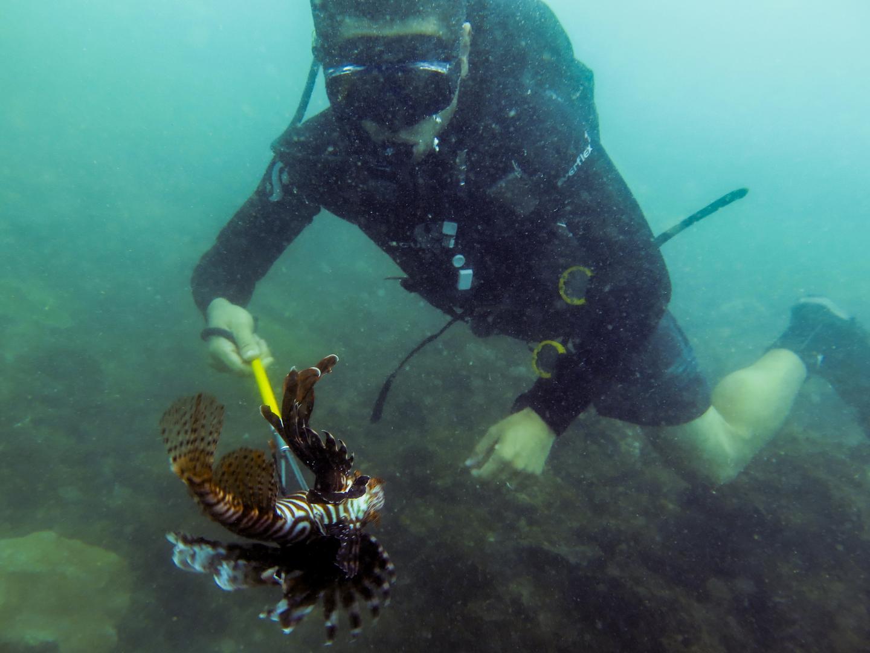 Lionfish predation experiment