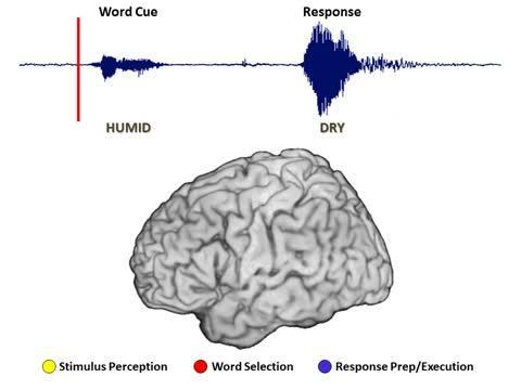 Brain Activity During Complex Task
