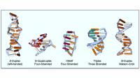 Different Flipon Structures