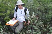 Sean Hoban, PhD Measuring Shinnery Oak Leaves