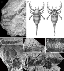 Terropterus xiushanensis