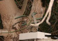 Robosquirrel and Snake