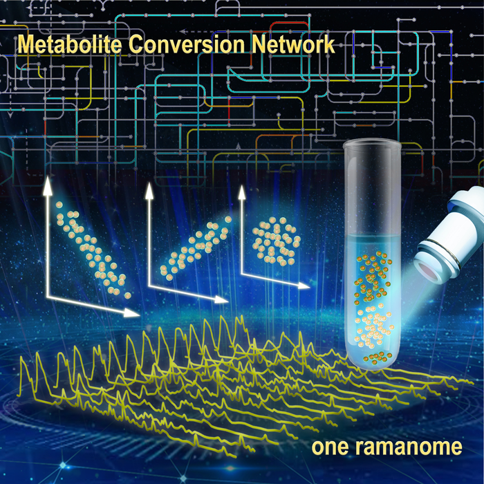New ramanome technology unveils metabolite conversion network from single cells