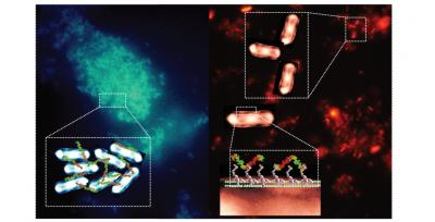 Fluorescent Markers in Pathogenic Bacteria