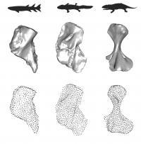 Rotating Humerus Shapes