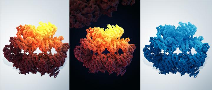Three-dimensional structure of the yeast Mec1-Ddc2 complex