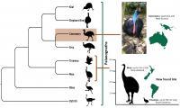 Palaeognaths Family Tree