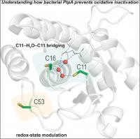 <i>M. tuberculosis</i> Phosphatase Structure with Cysteine Residues 11 and 16
