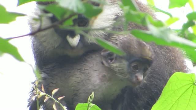 Monkeys See, Monkeys Do Cross Species Boundary