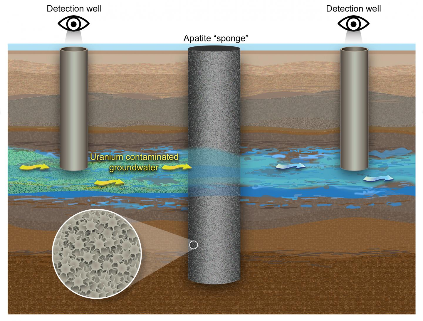 Apatite remediation technology captures uranium from groundwater