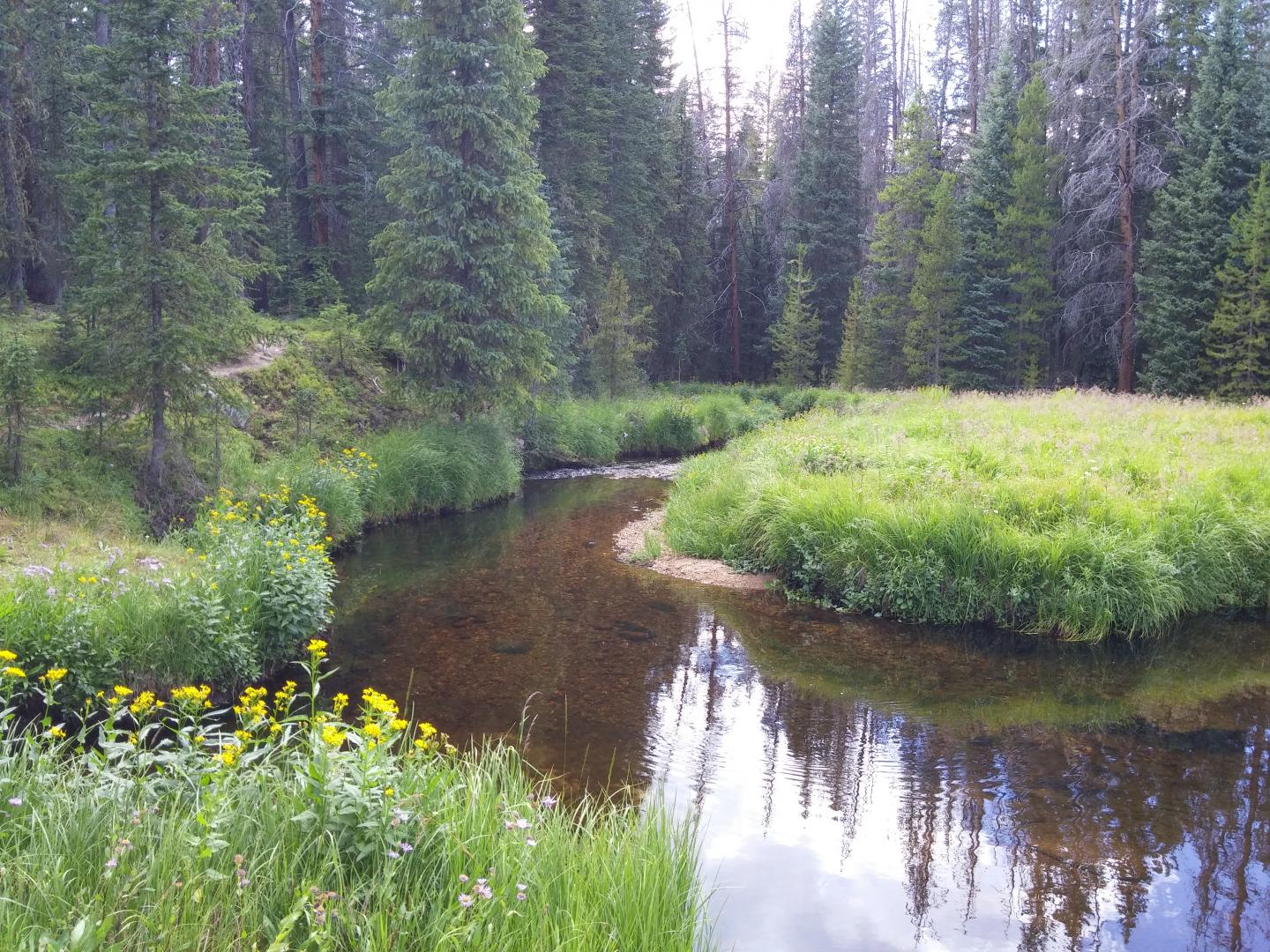 Forested Stream in Rocky Mountain National Park, Colo.