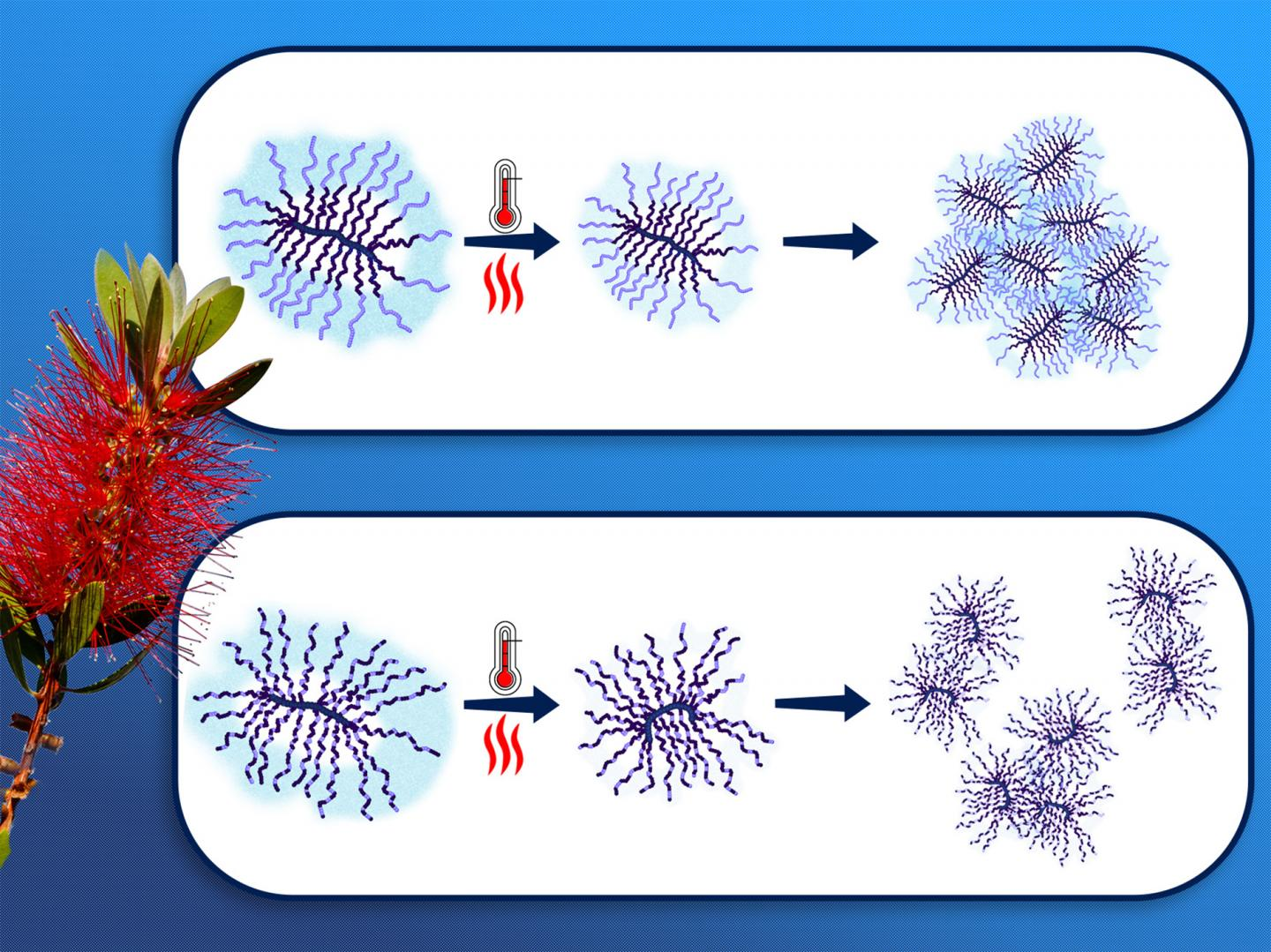 Thermoresponsive Bottle-Brush Polymers
