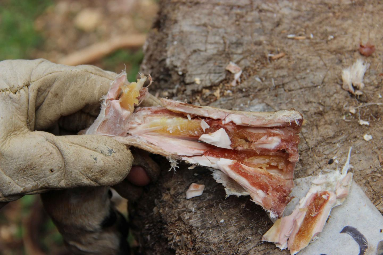 Bone Containing Marrow