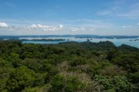 Tropical forests 2