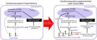 Strategies for Developing New Heart Failure Therapies