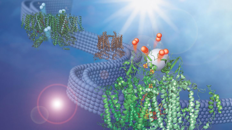 Hydrogen Producing Membrane
