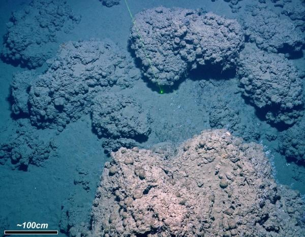 Carbonate crust on the ocean floor