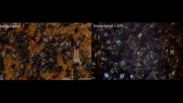 Bees Exposed to Neonicotinoids