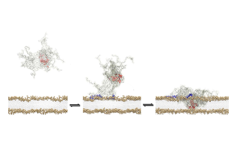 Toxic Oligomer Breaking Through Wall of Neuron