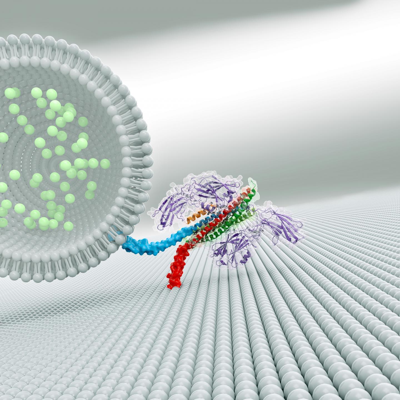 Three-Protein Complex