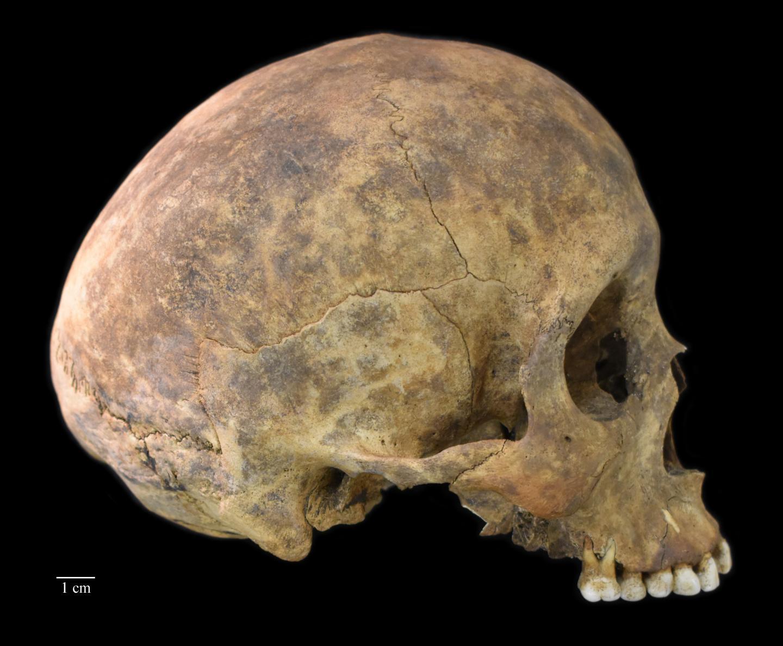 Playa Venado Skull
