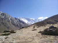 Subnival Vegetation in the Himalayan Region (3 of 3)