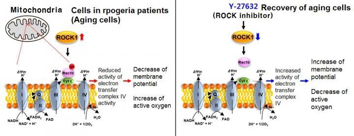 Y-27632 Drug
